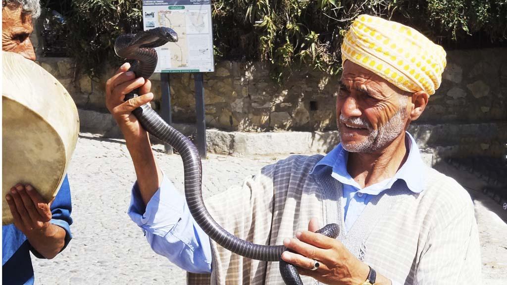 Snake charmer in Tangier, Morocco